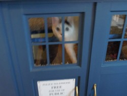 DIY Tardis Cat Fort