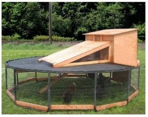 DIY Trampoline Chicken Coop