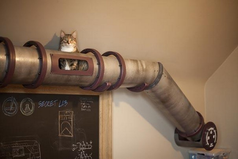 Home Office Cat Transit System