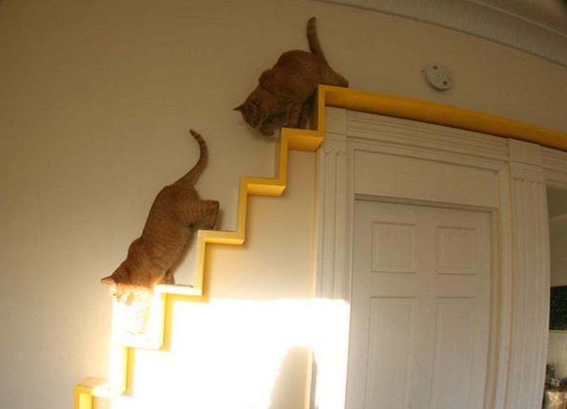 The Kitty Loft