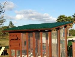 DIY Backyard Chicken Coop
