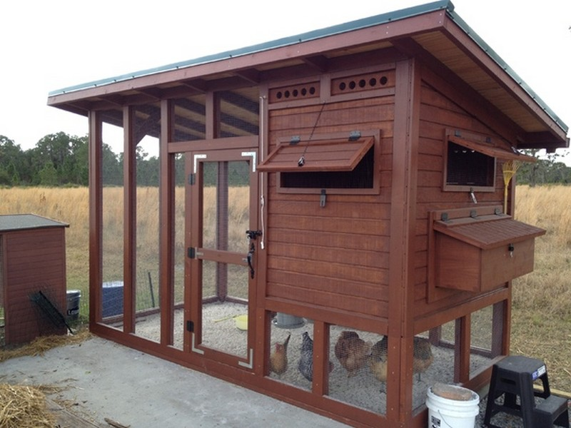 DIY Backyard Chicken Coop
