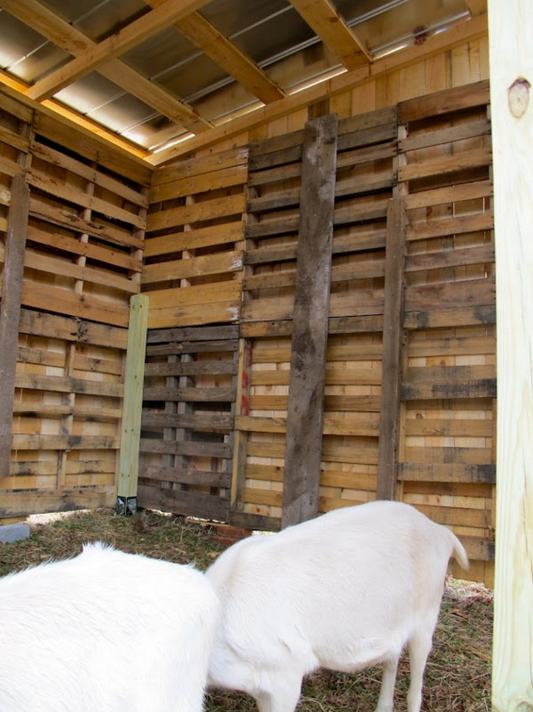 DIY Goat Pallet Barn - Finish Goat Pallet Barn