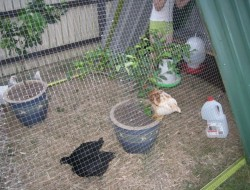 DIY Repurposed Swing Set Chicken Coop