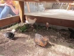 Homemade Chicken Coop - Hen House