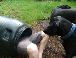 DIY Rain Barrel System - Screw on the gasket