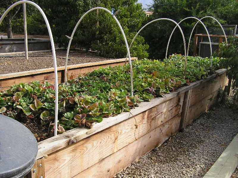 Diy raised garden bed with cover the owner builder network - Cover crops for vegetable gardens ...