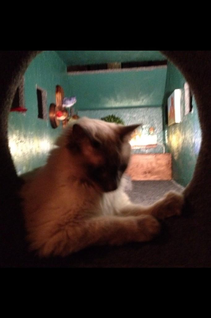 DIY AT AT Cat House - Inside View