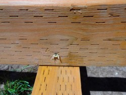 DIY Platform Deck - Toenail each side of the floor joists