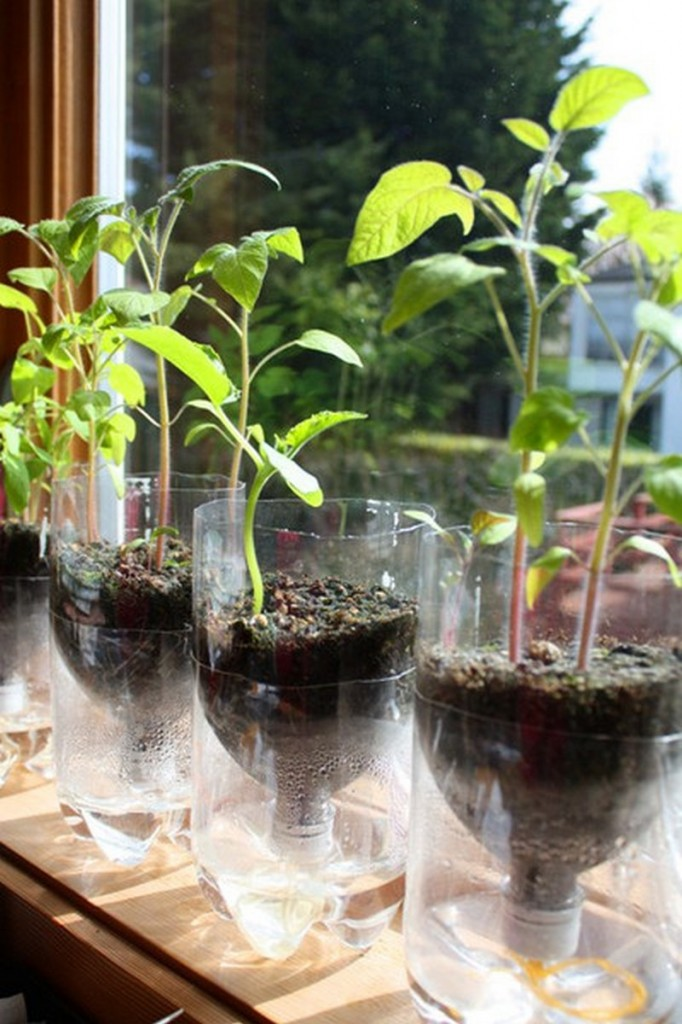 DIY Self-Watering Seed Starter Pots - Finished Self-Watering Seed Starter Pots