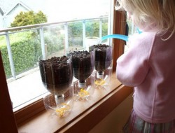 DIY Self-Watering Seed Starter Pots - Water the Soil