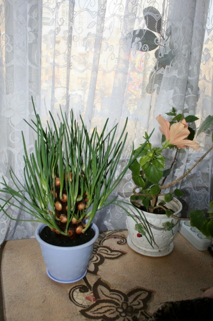 DIY Vertical Onion Planter - Finished Vertical Onion Planter
