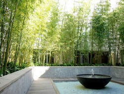 Modern courtyard surrounded by bamboo.