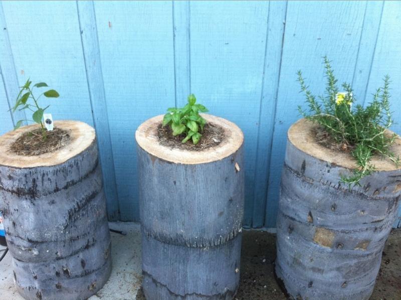Palm Tree Stumps Planter - shelterness