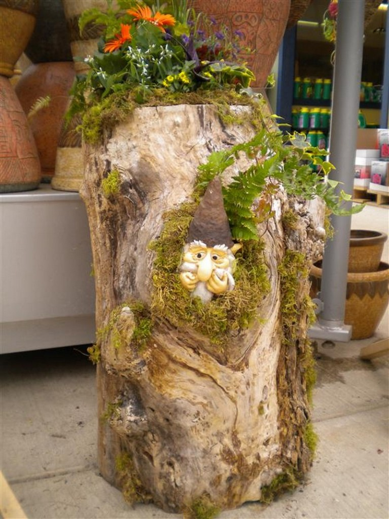 Garden Gnome in Tree Trunk - Port Kells Nurseries