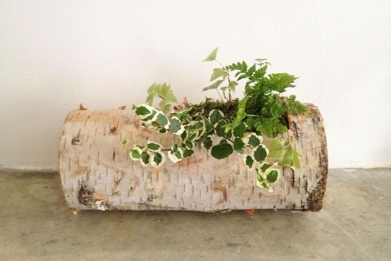 Birch Log Planter - Tasi Masi