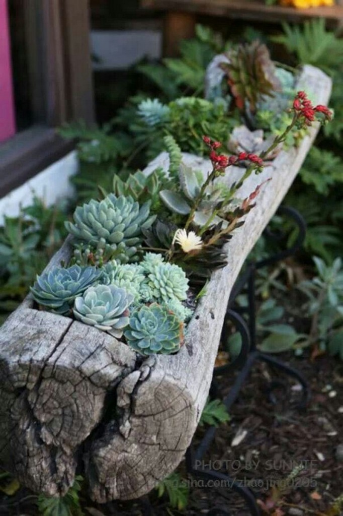 Log Planter - Shirly McDonnell