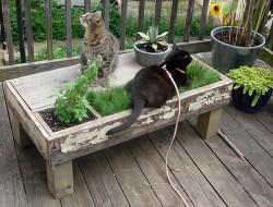 DIY Cat Planter Table - Pet DIYs