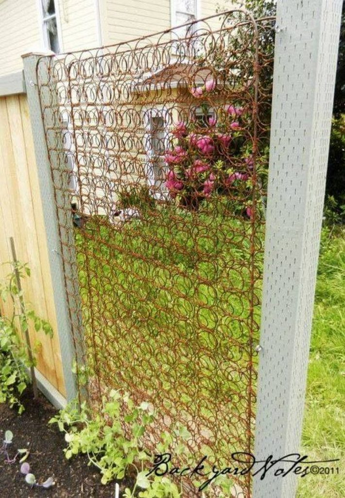 Trellis made from old spring bed.