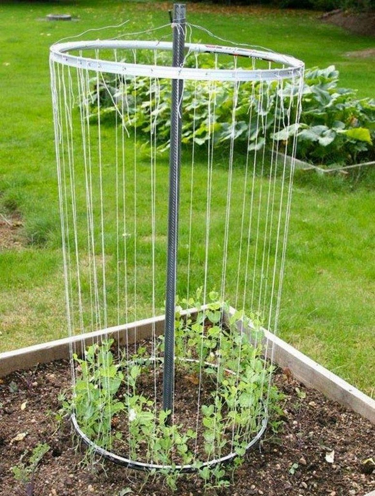 Trellis made from old bike rims.