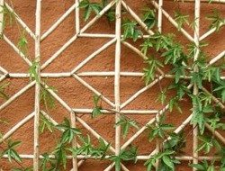 Trellis made from bamboo.
