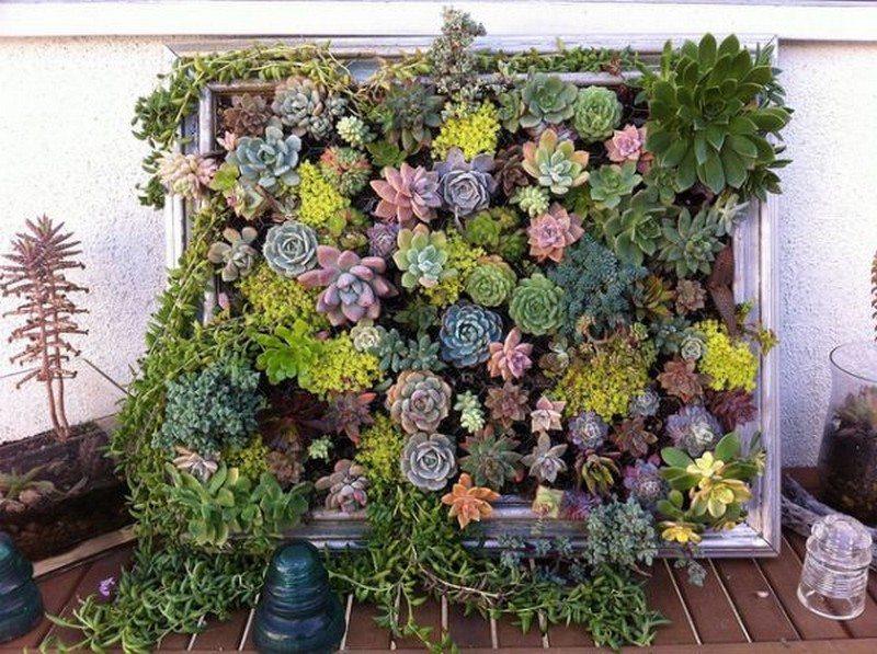 Superbe Living Wall   Vintage Frame Succulent Garden