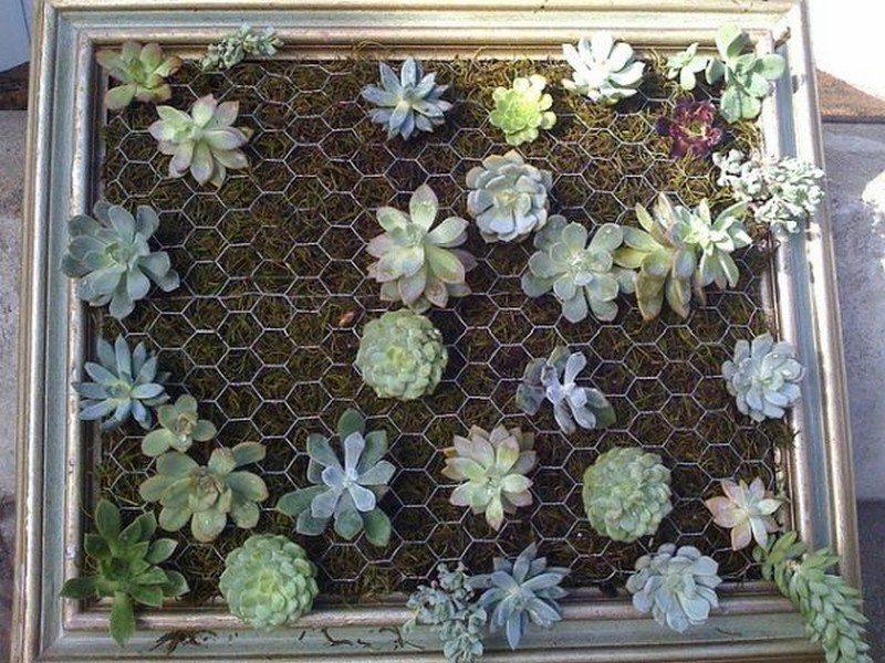 Living Wall   Vintage Frame Succulent Garden