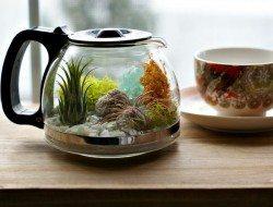 Coffee Pot Terrarium
