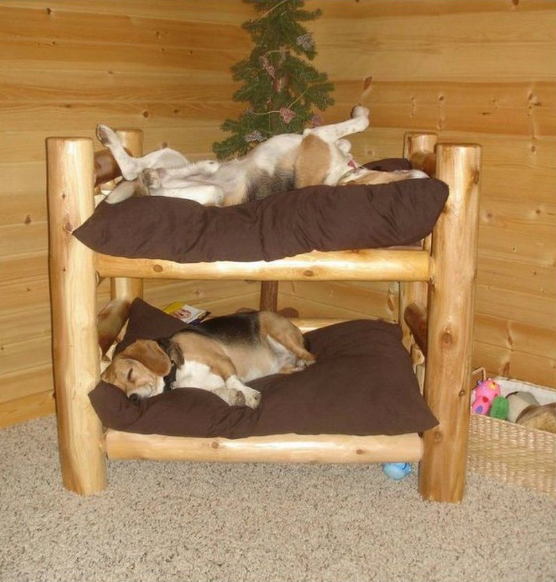 Fabulous Dog Bed Design Ideas Your Pets Will Enjoy