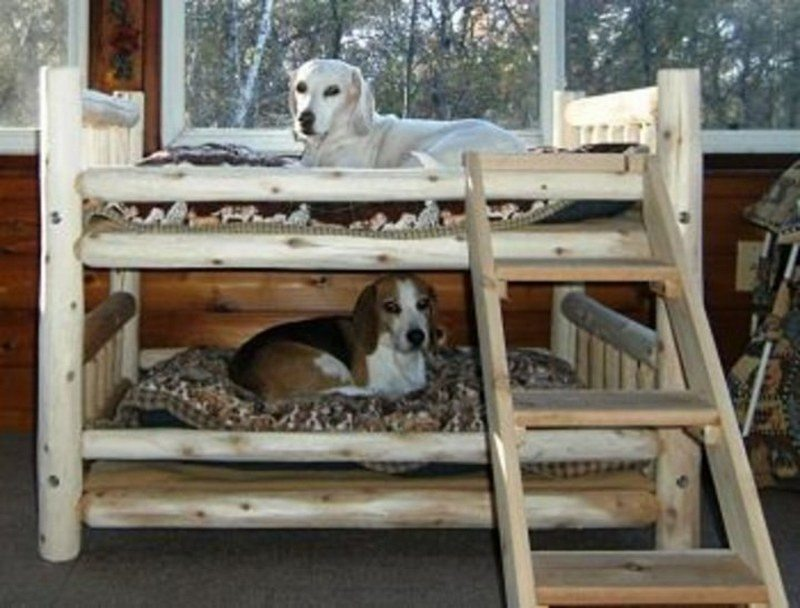 Learn how to make your own dog bunk bed by watching this video here…