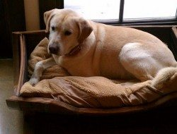 Dog bed design ideas