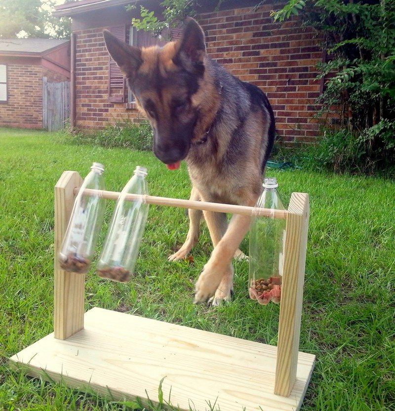 Spin out dog treat game the owner builder network - Como hacer camitas para perros ...