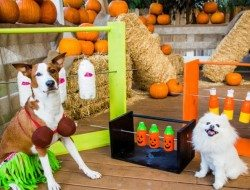 Spinning Plastic Bottle Dog Treat Game
