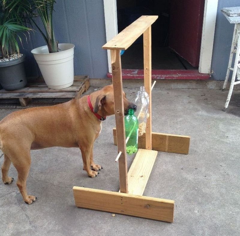 Dog Treat Dispenser >> Spin-out dog treat game | The Owner-Builder Network