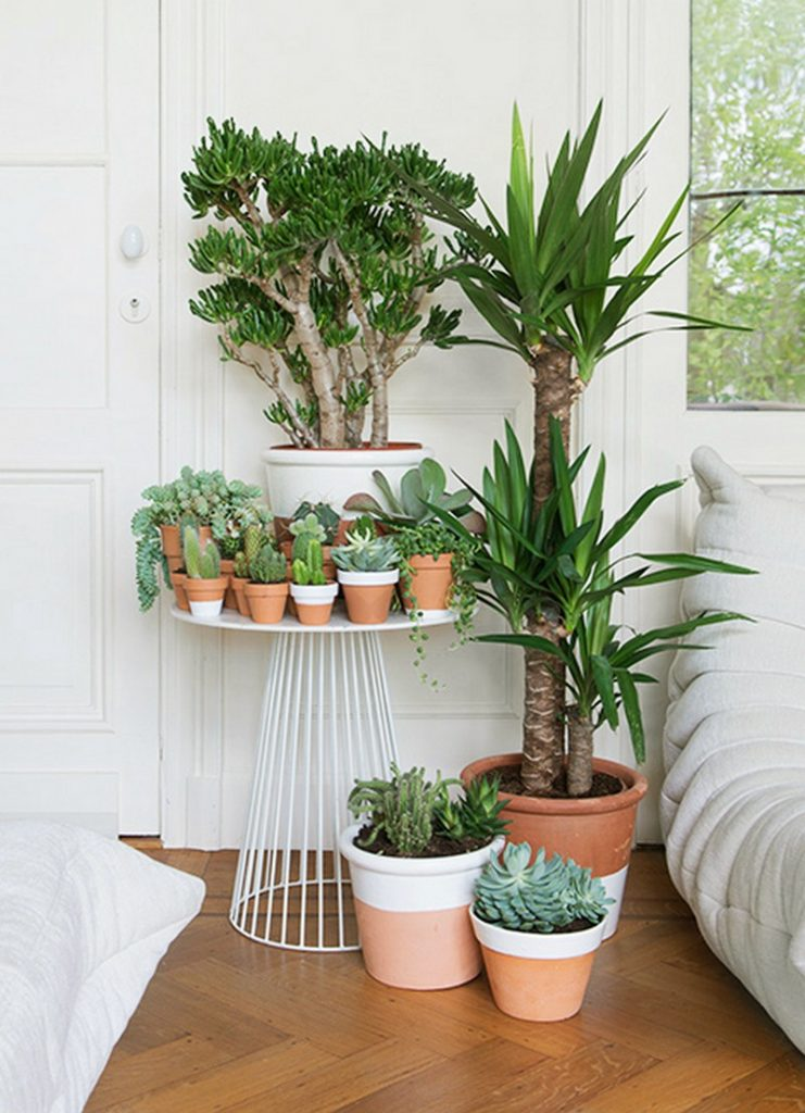 Wonderful ways to display indoor plants the owner builder network - Chambre plante ...