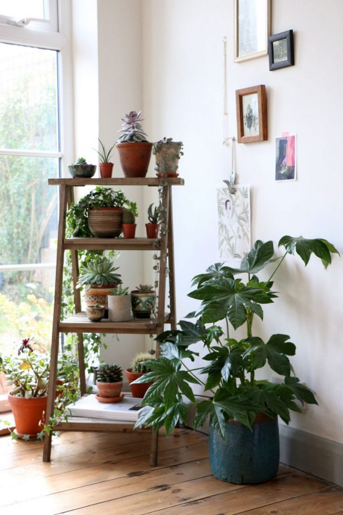 Plant Wall Shelves Dining Room