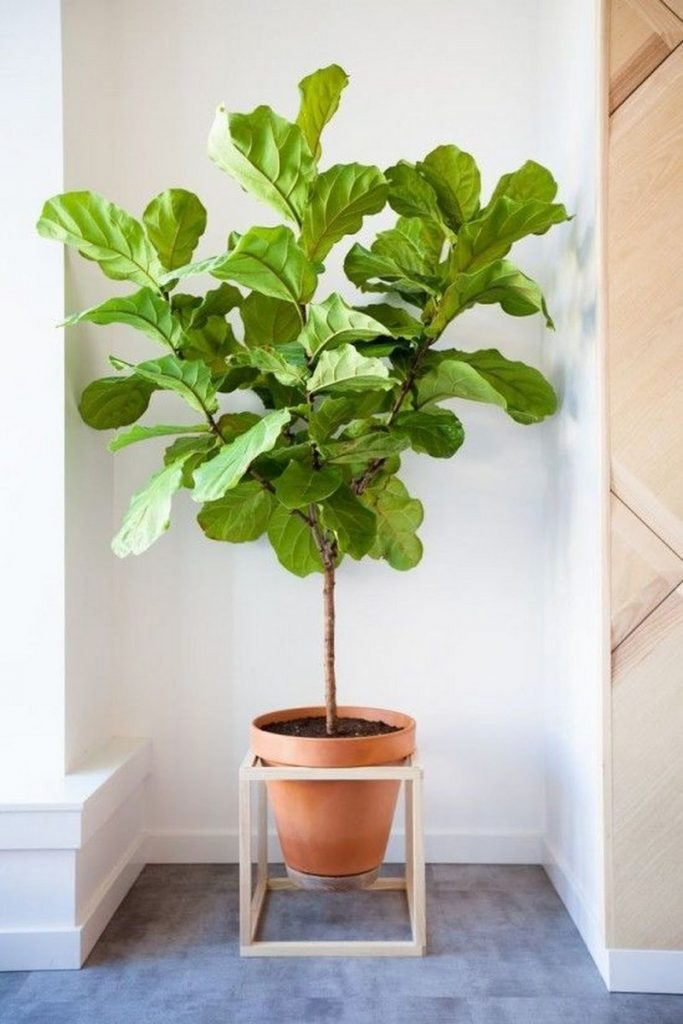 wonderful ways to display indoor plants the owner