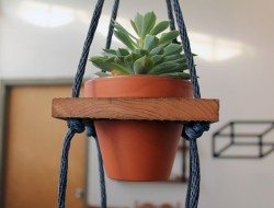 Amazing Ways to Display Indoor Plants