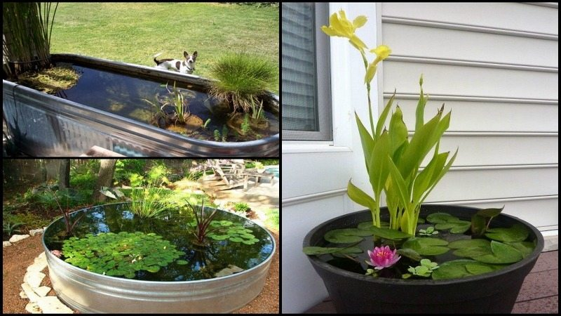 Backyard Ponds And Aquariums Montage
