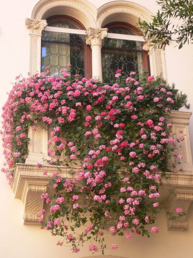 Must see balcony gardens - Flowers for apartment balcony ...