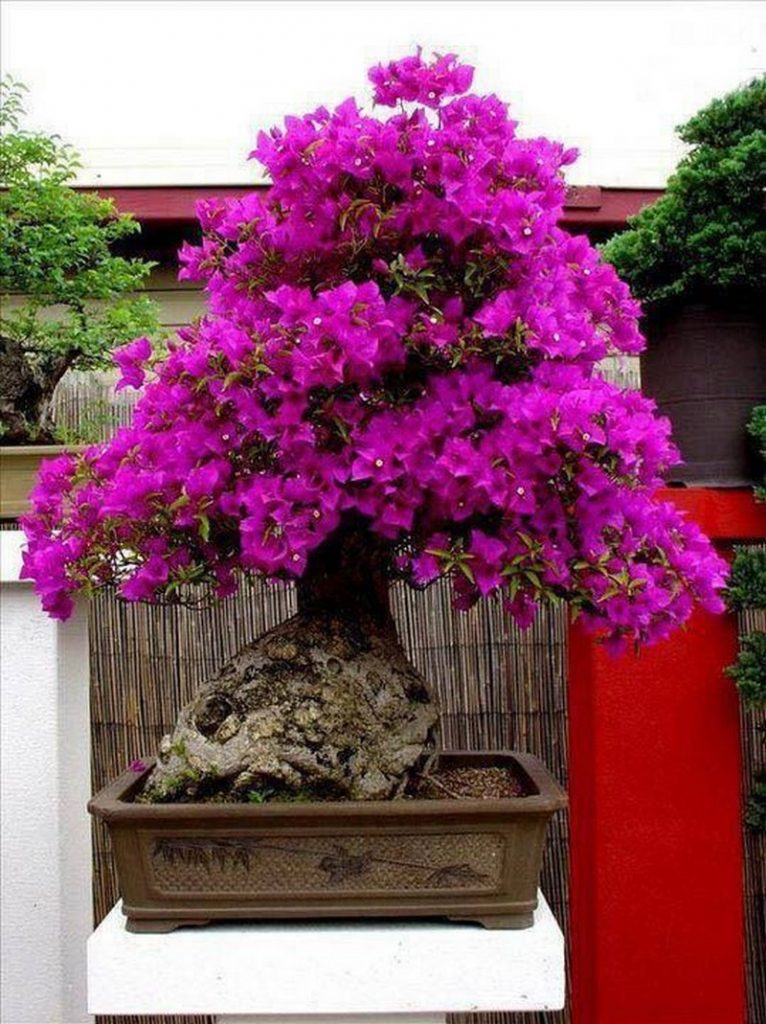 the extraordinary beauty of bonsai the ownerbuilder