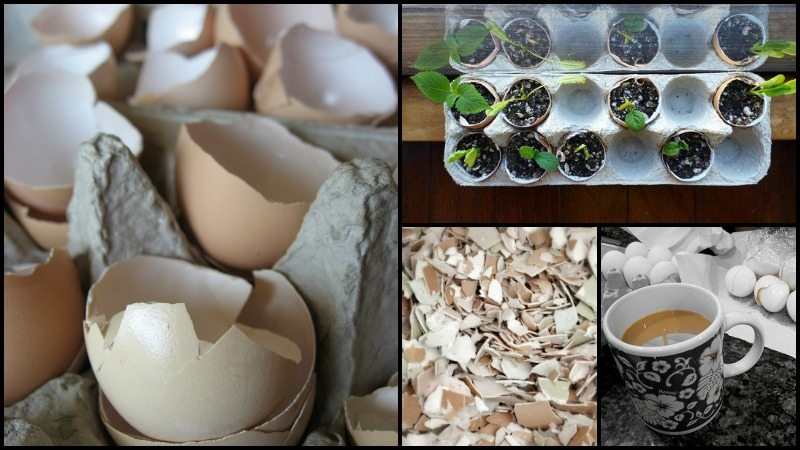 Different Uses of Eggshells