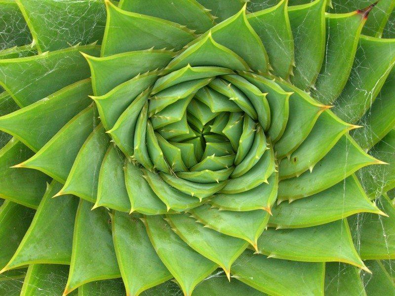 Geometrical Plants