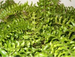 Plants that purify air at home