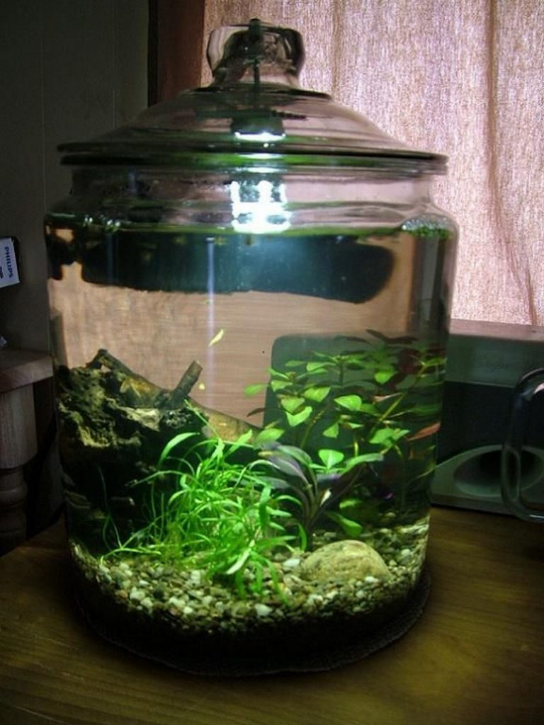 Diy fish tank herb garden joy studio design gallery for Fish tank in pond
