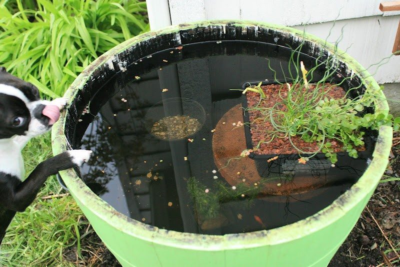 Awesome aquarium and fish pond ideas for your backyard for Container ponds with fish
