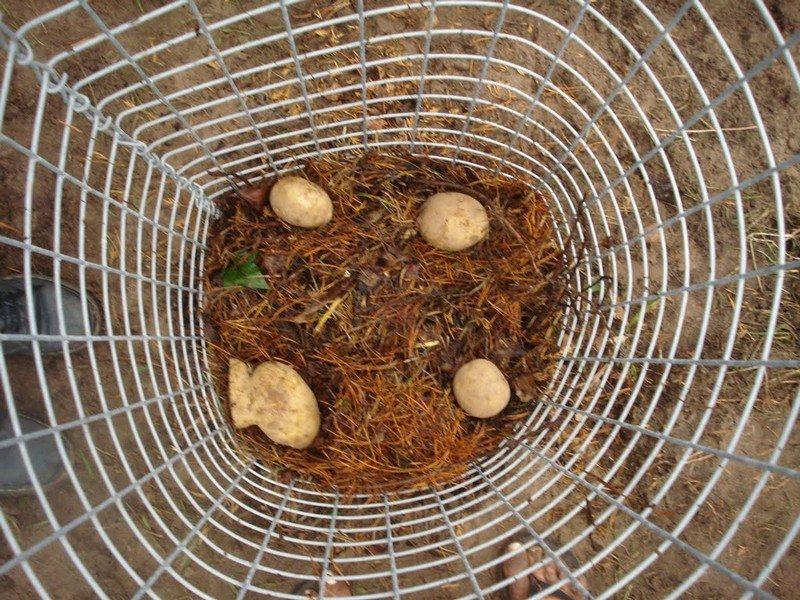 Potato Planters