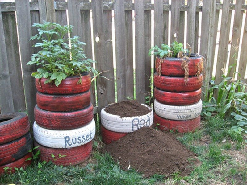 Planting Potatoes In Old Tires