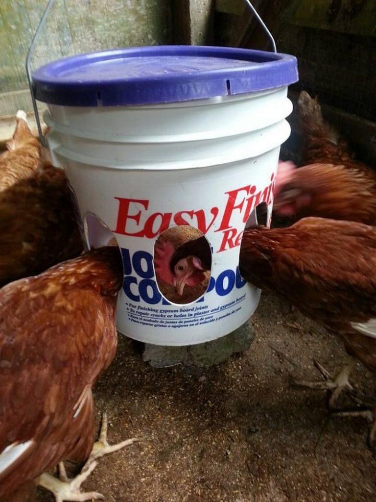 Easy Chicken Feeder Ideas
