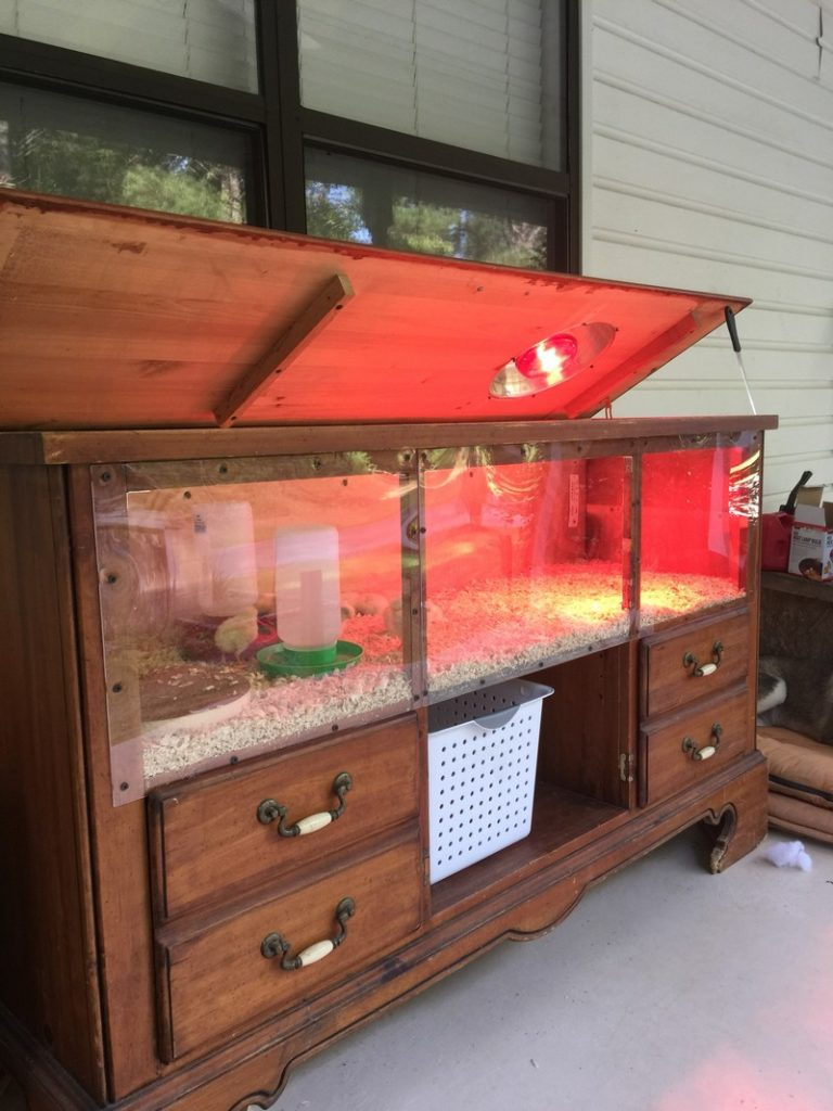 Clever Chick Brooder Ideas The Owner Builder Network